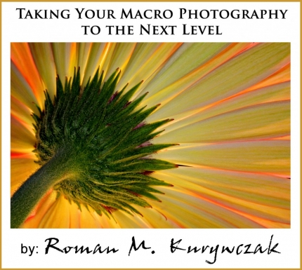 Taking Your Macro Photography to the Next Level